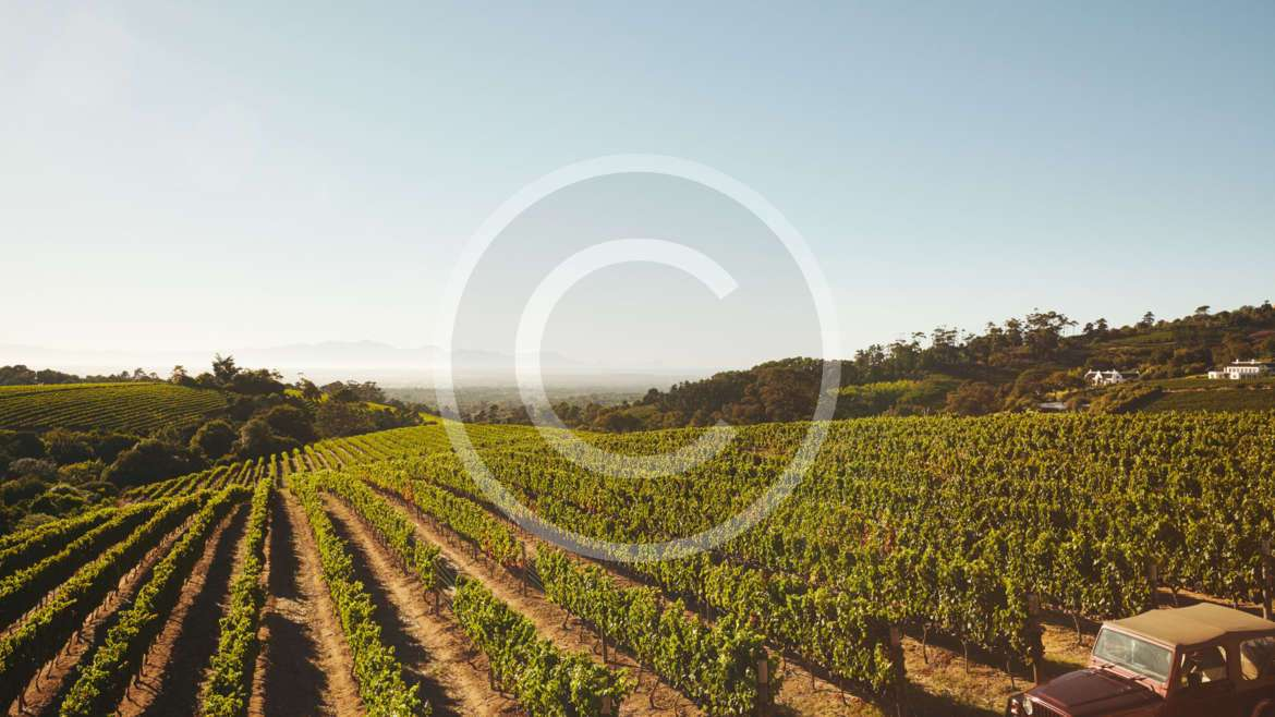 How to Grow Your Vineyard