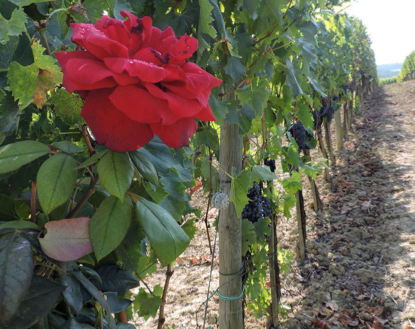Daily Wine News: In Favor of Reds